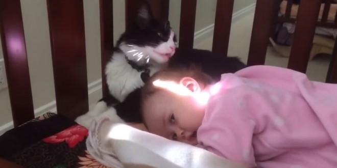 Un chatt lave la tête d'un bébé