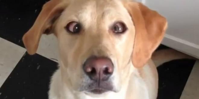 Ce chien louche sur commande
