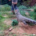 crocodile-creek-attack