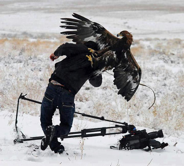 Un aigle réclame des droits pour la photo !