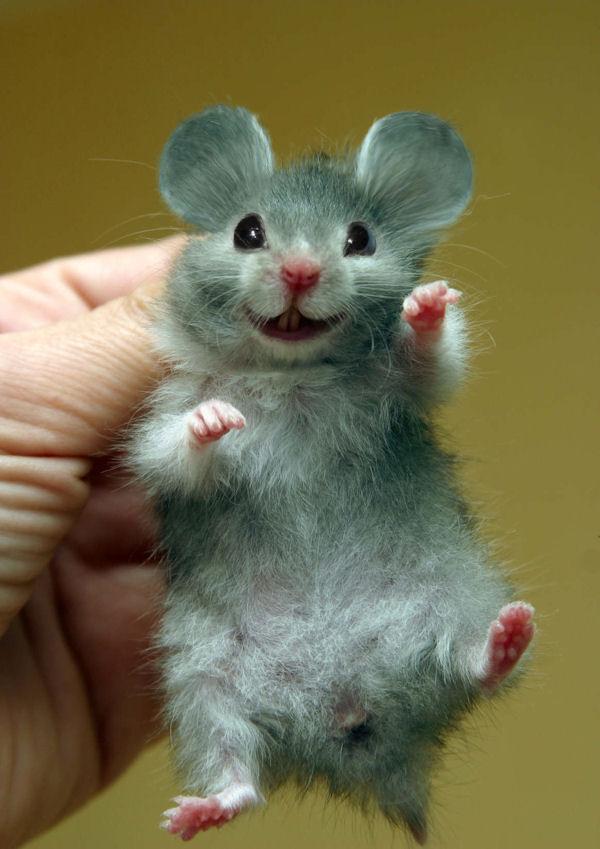 Un hamster aux grandes oreilles fait un sourire.