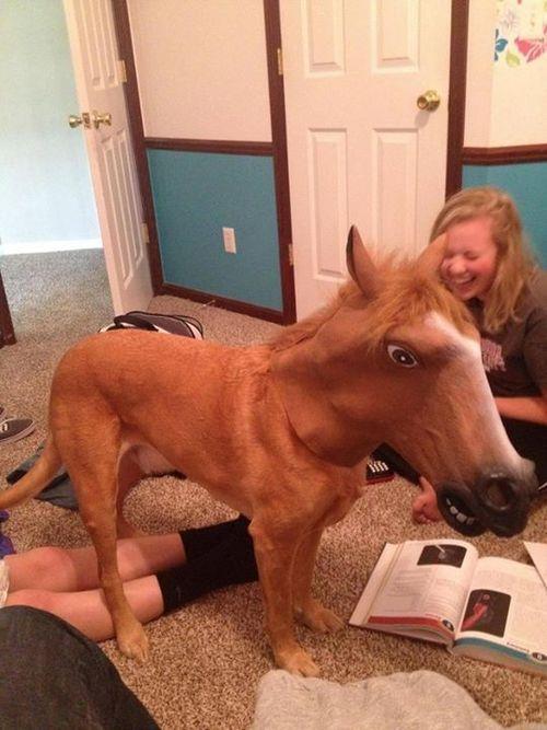 Un chien avec un masque de cheval sur la tête x)