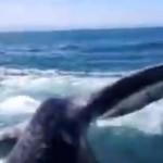 ballade-bateau-mexique-baleine-frappe-femme-queue