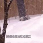 canada-toronto-zoo-panda-neige