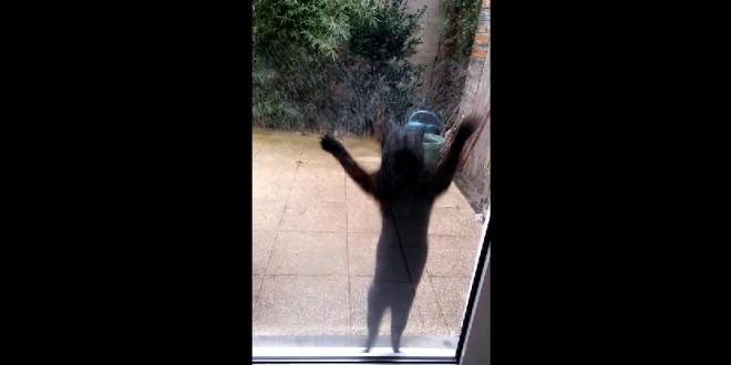 Ce chat veut absolument rentrer dans cette maison