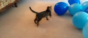 chat-vs-ballon-de-baudruche