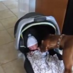 chien-premiere-rencontre-bebe