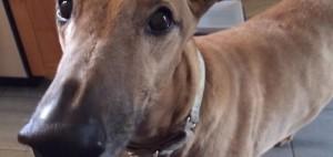 chien-tronconneuse-lol-doublage