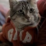 conseil-love-winston-le-chat