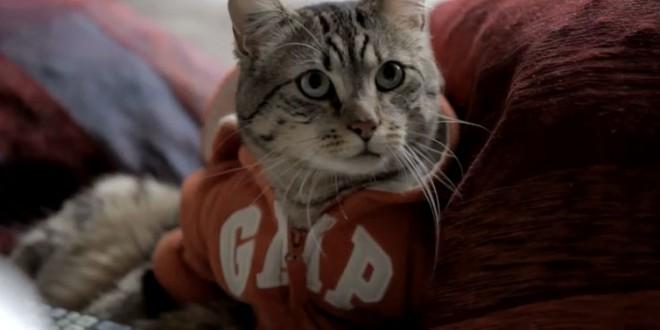 Un chat aide son maître à draguer sur internet