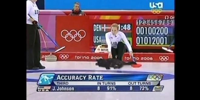 Jouer au curling avec un chat