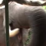 elephant-attaque-jeep-touriste-sri-lanka