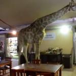 giraffe-restaurant-afrique-du-sud