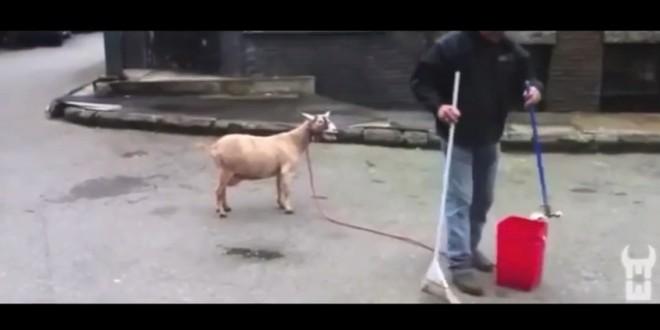 Maitre (Gims) Goats chante Zombie