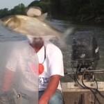 carpe-asiatique-poisson-volant-head-shot-dans-tete-pecheur
