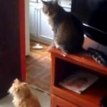chat-casse-tout