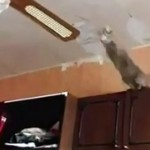 chat-saut-fail