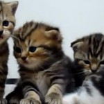 chaton-migion-cute-baille-compilation
