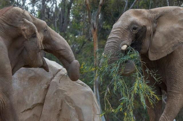 elephant-recontre-premiere-fois-1