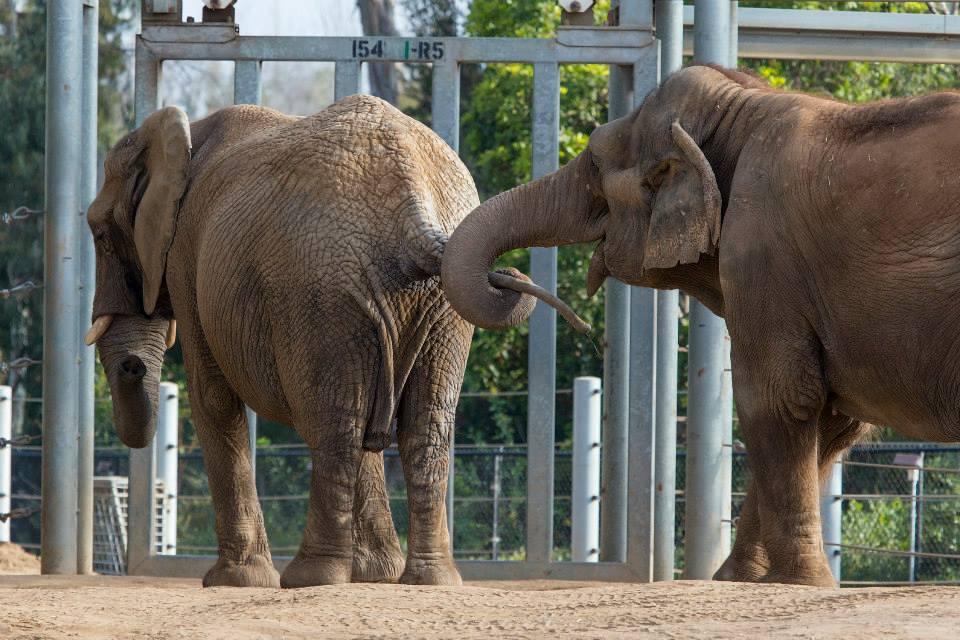 elephant-recontre-premiere-fois-2