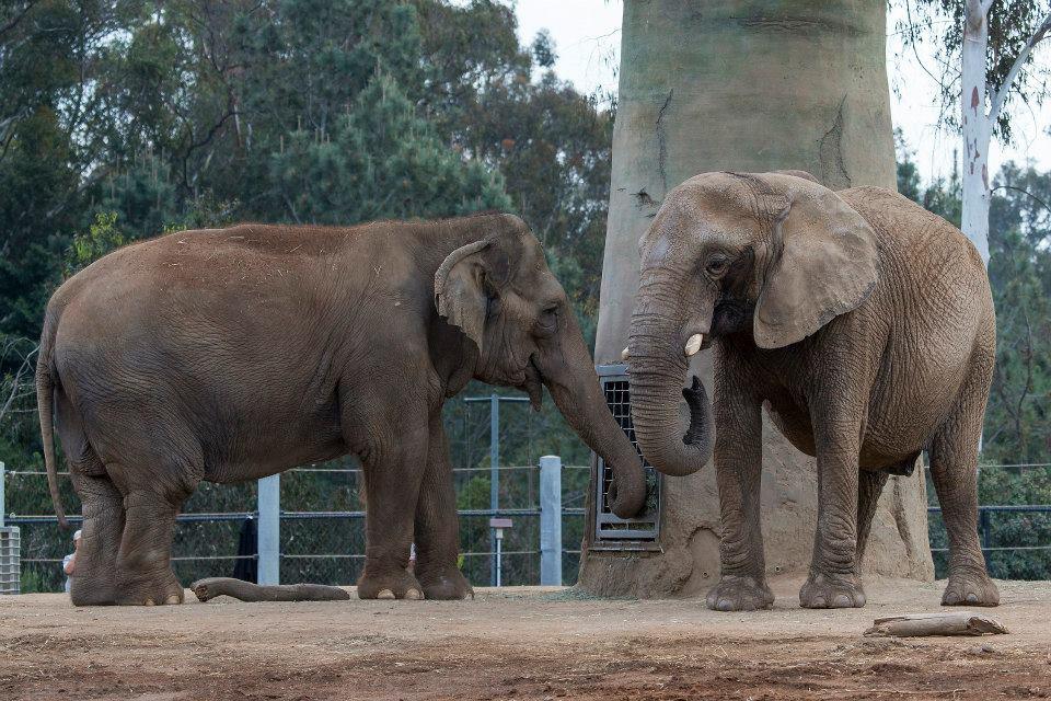 elephant-recontre-premiere-fois-3