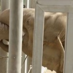 elephant-zoo-premiere-rencontre-cute