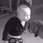 first-kiss-enfant-bebe-animaux-chien-lol
