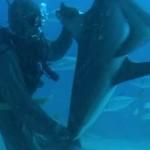 plongeur-hynotise-requin-wtf