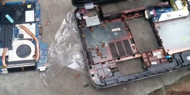 Son ordinateur portable infesté de cafards vivants