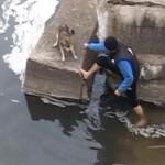 sauvetage-chien-riviere-cute