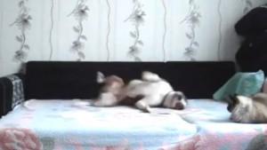 surveille-camera-chien-lit-maitresse