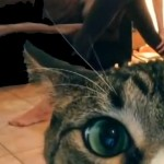 videobomb-chat-yoga-fun-maitresse