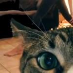 videobomb-chat-yoga-fun-maitresse