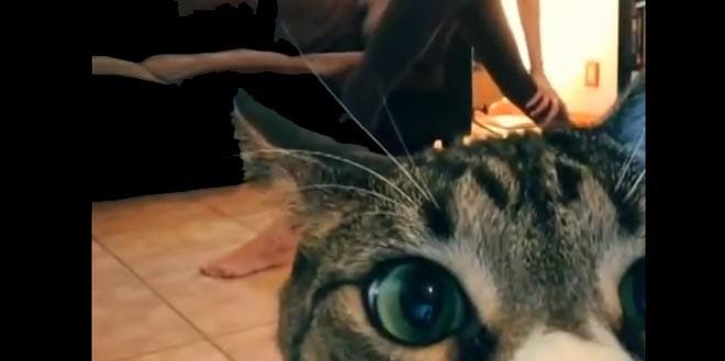 Un chat débarque pendant le yoga de sa maîtresse