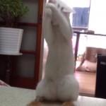 chat-joue-avec-chaton-cute
