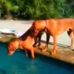 chien-maitre-simule-noyade-sauvetage