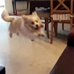 chien-saute-canape-fail-slowmotion