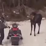 gnou-attaque-moto-neige