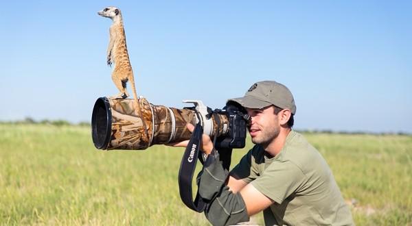 Un suricate utilise un photographe comme point de vue