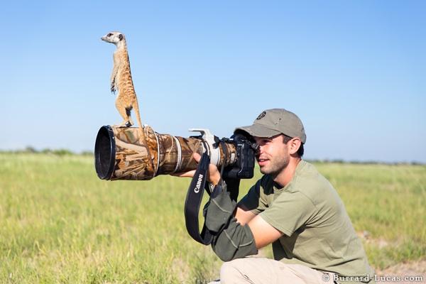 Meerkat on Camera