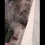 chat-chute-immeuble