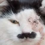 chat-maltraite-parceque-ressemble-hitler