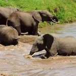 elephant-sauvetage-cute