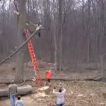 homme-coupe-arbre-branche-tombe-fail