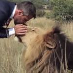 homme-jouer-football-lion-savane-cute