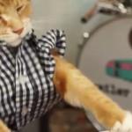 keyboard-cat-chat-piano-lol