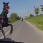 moto-manque-percute-cheval-omg