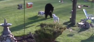 ours-fuite-chien