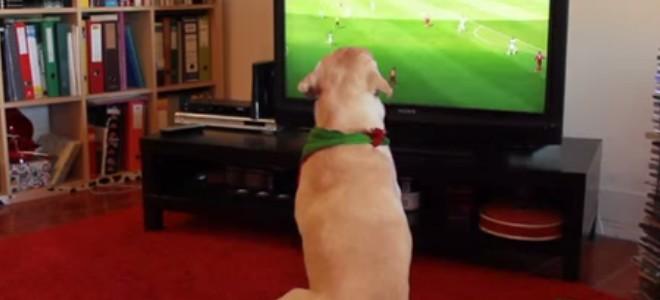Un chien déçu par l'élimination du Portugal en coupe du monde