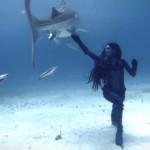 requin-tigre-danse-australie
